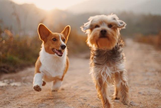 Dog-Friendly Spots in Nashville